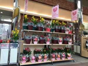 生花コーナー陳列商品!トゥインクル西沢正面入り口